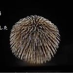 【初体験!】新潟県長岡市の日本一の花火を観て感動した。
